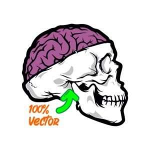 skull vexctor